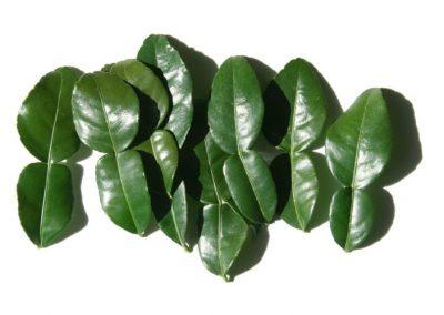 Feuille de Lime de Kaffir
