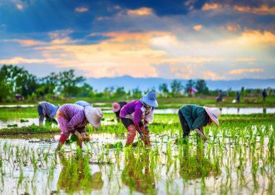 Photo Asiatique